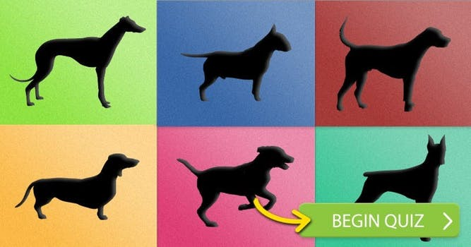 Identify these Dog Breeds!