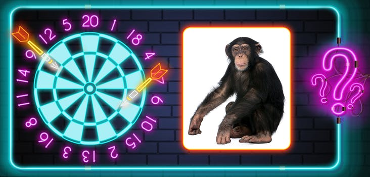 Q 13. What type of monkey is this? Type the species into the space provided!