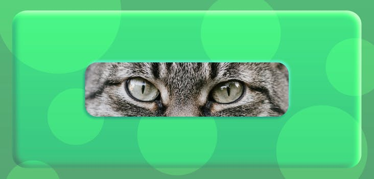 Guess the Animal by Its Eyes Quiz Answers - VideoQuizHero