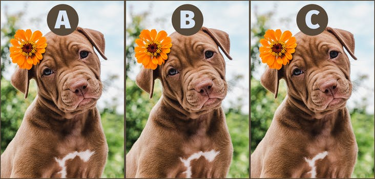 Q 1. Which puppy is the odd one out? Type your answer in below!