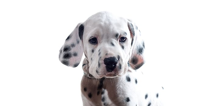Q 3. Can you name this breed of dog? Type your answer in below!