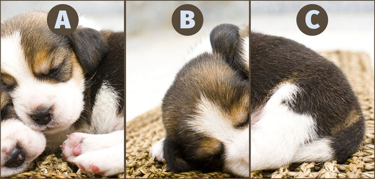 Q 2. Can you rearrange this image? Type your answer in below!